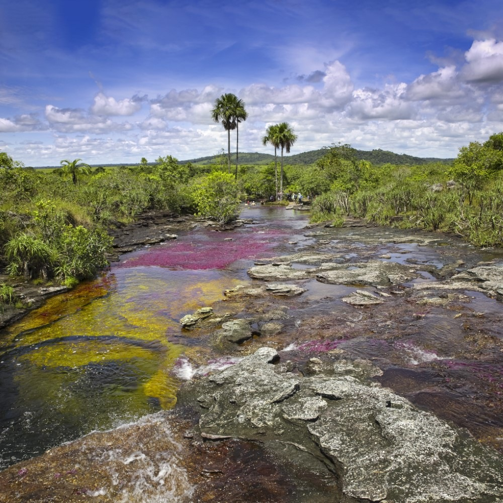 """The river Canio Cristales is commonly called the """"River of Five Colors"""" or the """"Liquid Rainbow"""""""