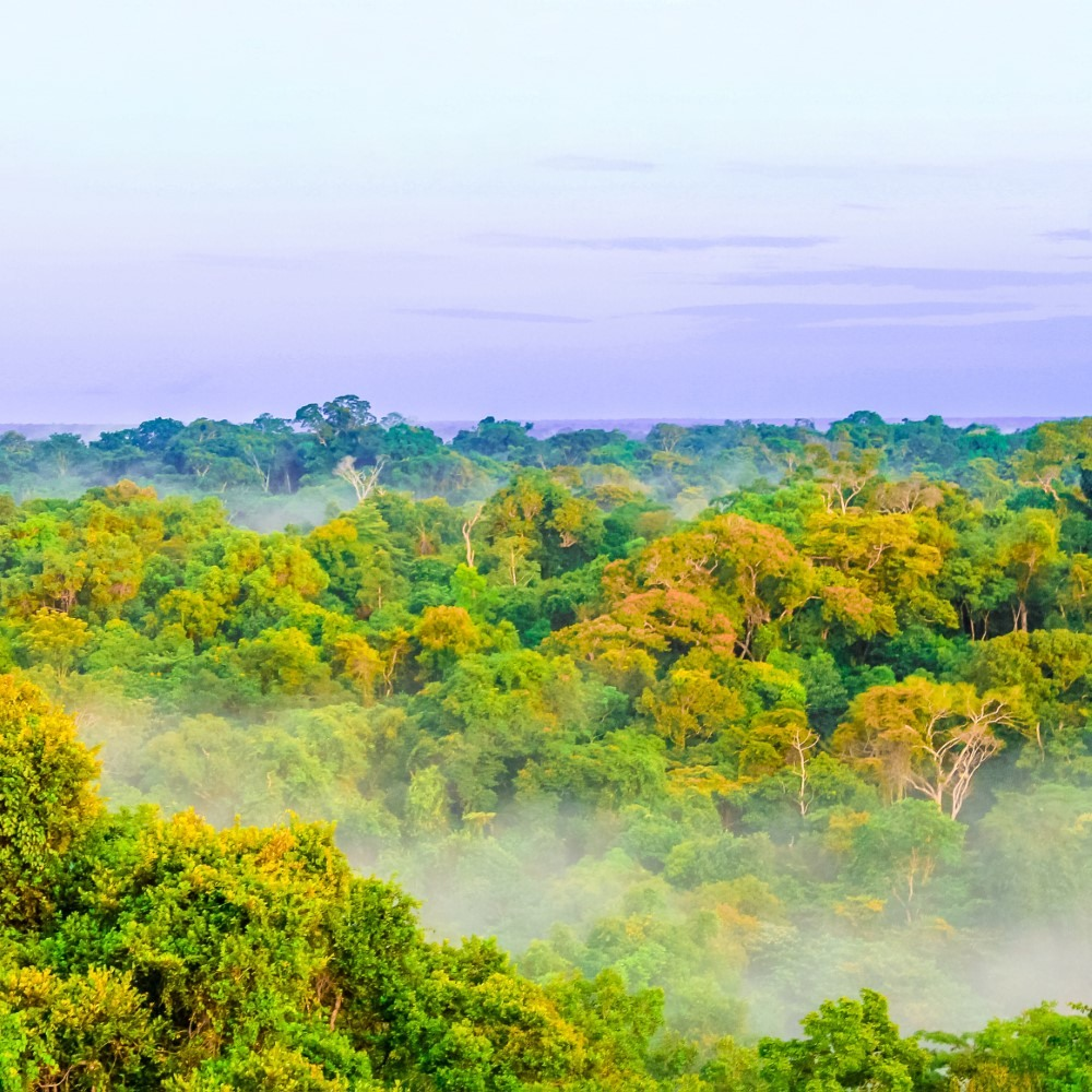Morning fog over rain forest in Colombia