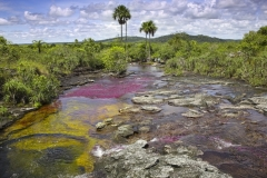 "The river Canio Cristales is commonly called the ""River of Five Colors"" or the ""Liquid Rainbow"""