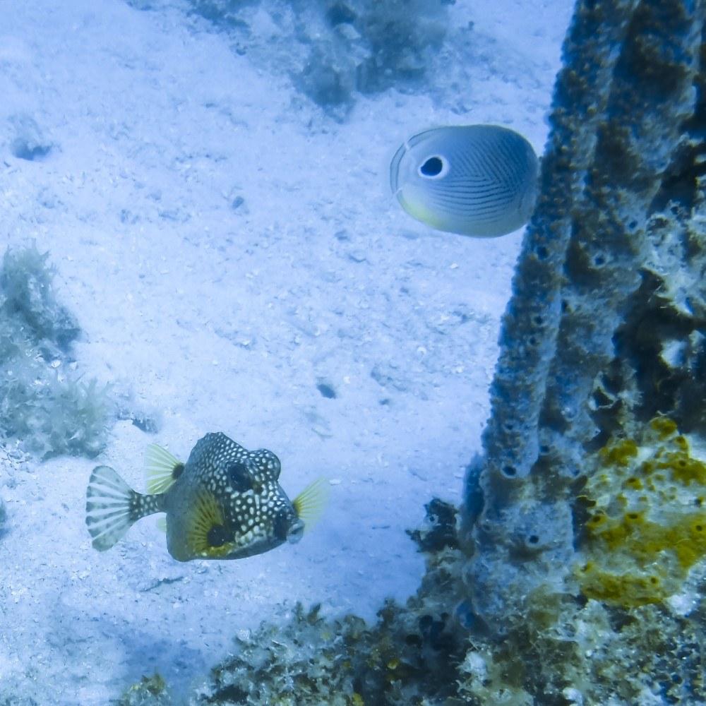 Scuba-dive-2