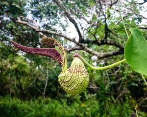 Exotic Flora Cali